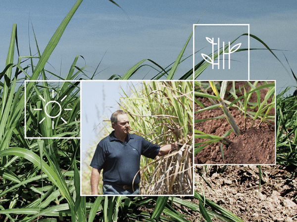 Sugar Cane Irrigation Solutions